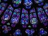 luminary-petals-by-amy-maddox